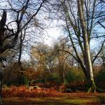 """The New Forest"" by mariawhyte"