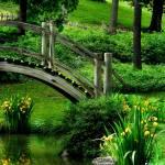 """Japanese Garden ~ Geneva, IL"" by Dwiggs"