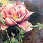 """Wild Rosie"" by sokolovich"