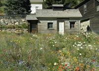 Rustic House in Wildflowers