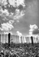 Old Fence in BW