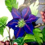 """""""Blue flower on vine"""" by Dorli"""
