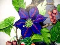 Blue flower on vine