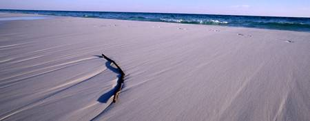 Driftwood on Sand, Destin, Florida