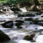 """River In Great Smoky Mountains National Park, NC"" by fineartphoto"