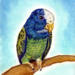 """White Capped Pionus Bird Portrait Art Print"" by OldeTimeMercantile"