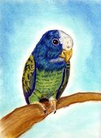 White Capped Pionus Bird Portrait Art Print