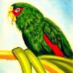 """White Fronted Amazon Parrot  Portrait Art Print"" by OldeTimeMercantile"