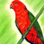 """""""King Parrot Bird Portrait Art Print"""" by OldeTimeMercantile"""