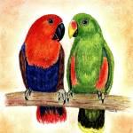 """""""Eclectus Parrots Bird Portrait Art Print"""" by OldeTimeMercantile"""