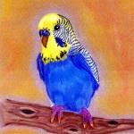 """Parakeet Bird Portrait Art Print"" by OldeTimeMercantile"