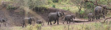 Elephants on Patrol