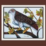 """Graphic2Red-Tailed Hawk, poster"" by Barbara"