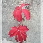 """""""Last autumn leafs"""" by HeikeSchenkArena"""