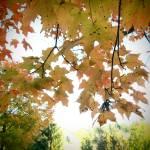 """mid-autumn"" by mandalaworld"