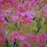"""""""Autumn"""" by faithfulheart"""