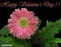 HAPPY VALENTINE DAY  2009 ! ! !