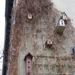 """Birdtown"" by hco"