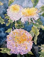watercolor paintings chrysanthemums