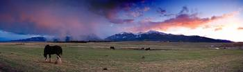 Clydsdale, Wallowa Mountains Sunrise