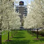 """""""Chicago Magnificent Mile Spring"""" by nicelysighted"""