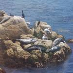 """Sunning Seals"" by pharrisart"