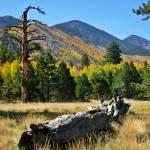 """""""Lockett Meadow in Autumn"""" by dustinblodgett"""