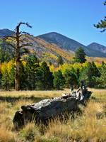 Lockett Meadow in Autumn