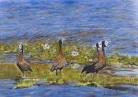 White Faced Whistling Ducks