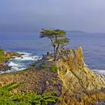 """Lone Cypress"" by leoza"