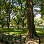 """Central Park, New York City"" by fineartphoto"