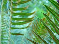 FOREST FERN Art Prints Green Ferns Baslee Troutman
