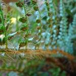 """DELICATE BABY FERN BRANCH Art Prints"" by BasleeTroutman"
