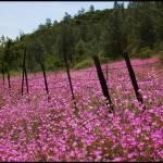 """Pink Wild Flowers 3"" by brandynicole"