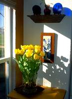 Yellow Tulips Window View