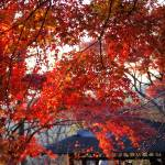 """""""秋の高尾山 紅葉"""" by anyonghua"""