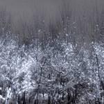 """Snow Glow"" by BarbaraLin"