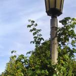 """Lamp Post"" by qubitgfx"