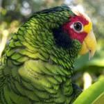 """""""Parrot - Ek Balam, Mexico"""" by jme"""