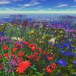 """Field of Flowers"" by groovynet"