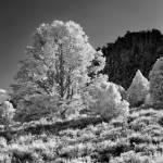 """Prairie by Mt. Charleston Nevada"" by Jokehawk"