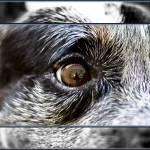 """In His Eye"" by CJBEdwards"