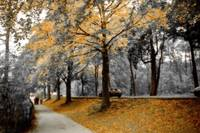 Autumn - Roath Park