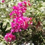 """""""Goan Garden 5"""" by ken_croslin"""