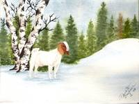 Boer Buck in Winter