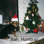 """Bah Humbug"" by gflcreations"