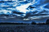 Cotton Feild Before Sunset
