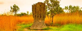 A Cathedral Termite Mound At Kakadu -NT