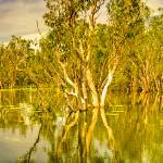 """Yellow Waters At Kakadu 04 -NT"" by gthomas68"