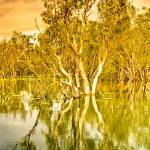 """Yellow Waters At Kakadu 04 II -NT"" by gthomas68"